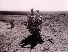 Засуха в Судане и Эфиопии