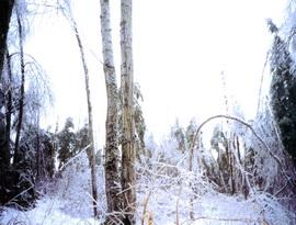 Ледяной шторм в Онтарио