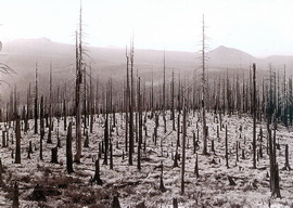Яколтский очаг лесного пожара